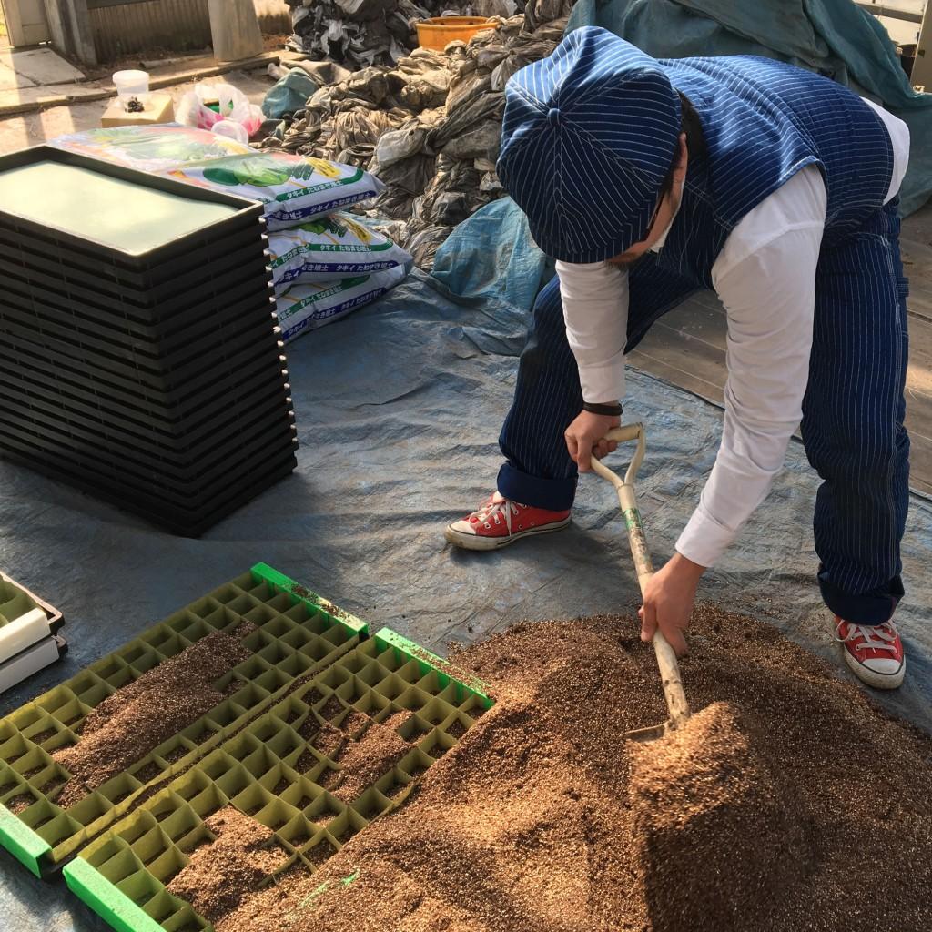 綿花山形コットン種蒔き